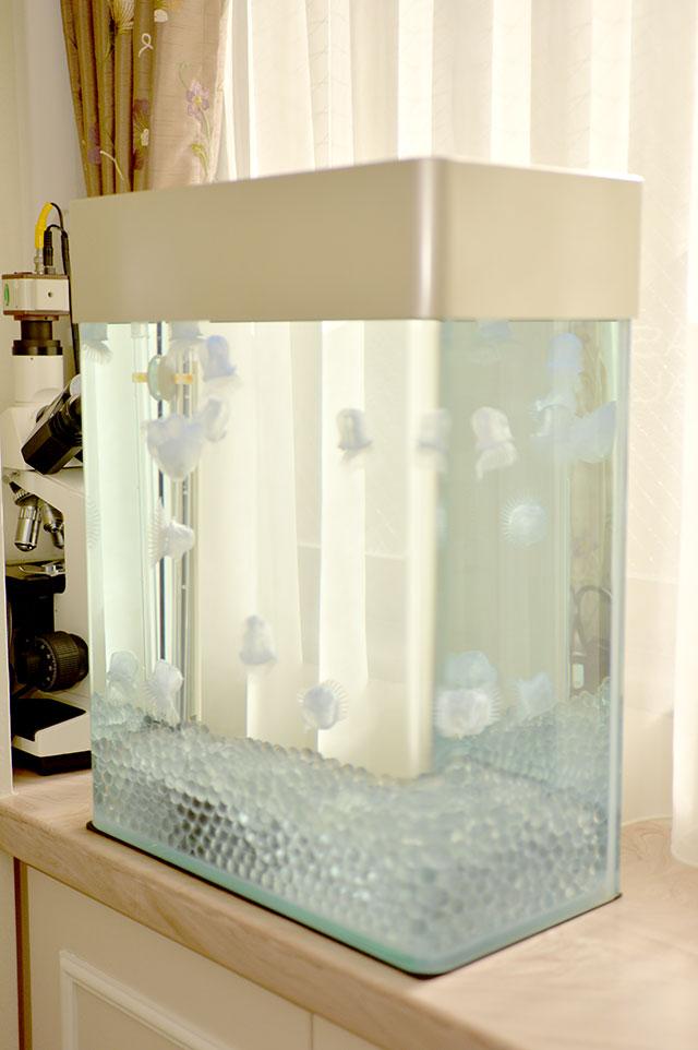 特診室クラゲ